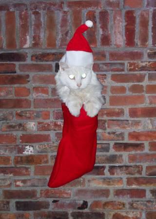Christmas Ruff